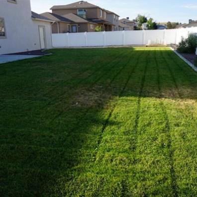 171 sun hawk back yard