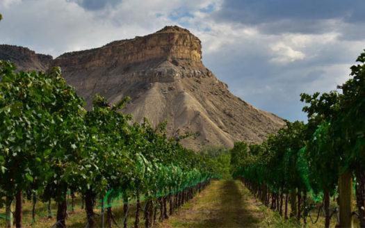 Vineyard in Palisade, Western Colorado's wine growing region.