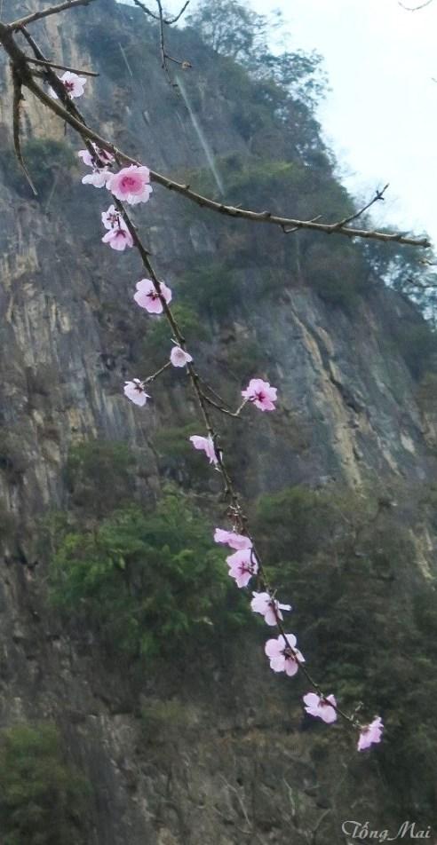 Núi Đồn Cao sau phố cổ Đồng Văn. Photo: TongMai
