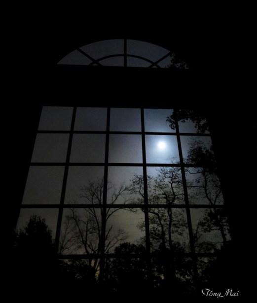 tongmai-2016-autumn-night-behind-my-window2