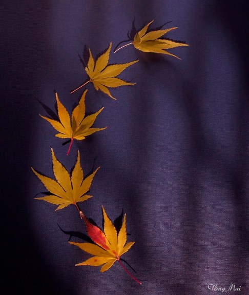 mai-2016-autumn-leaves-1a-ph1a