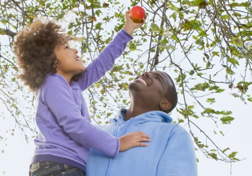 Girl and her dad picking an apple from a tree