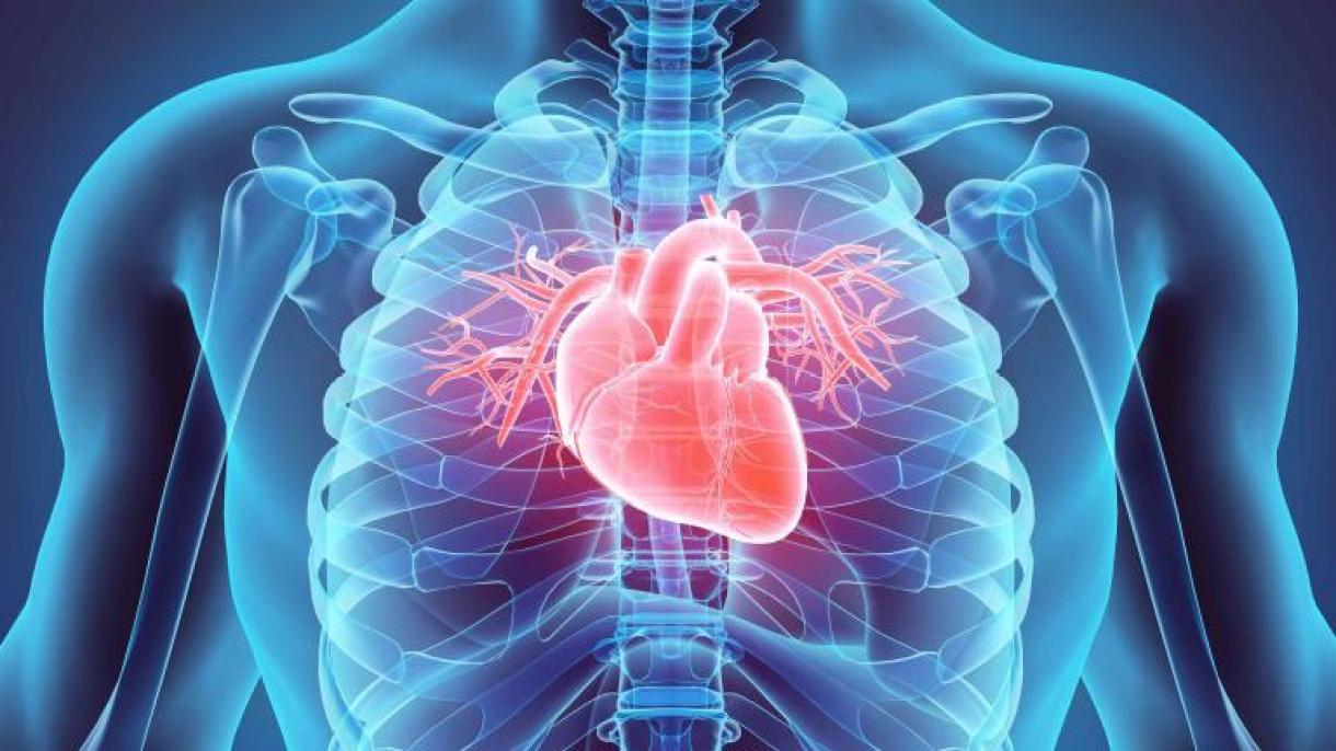 La enfermedad cardíaca: 5 hierbas para prevenirlo y proteger su calor