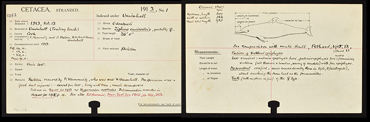 The first UK stranding card dating to 1913.