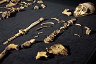 Australopithecus Sediba esqueleto réplicas de fósseis