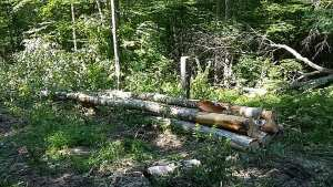 Just starting a new timber harvest in Groton, N.H.