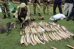 poaching in keya. what a waste