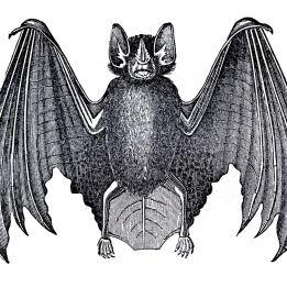 bat facing out