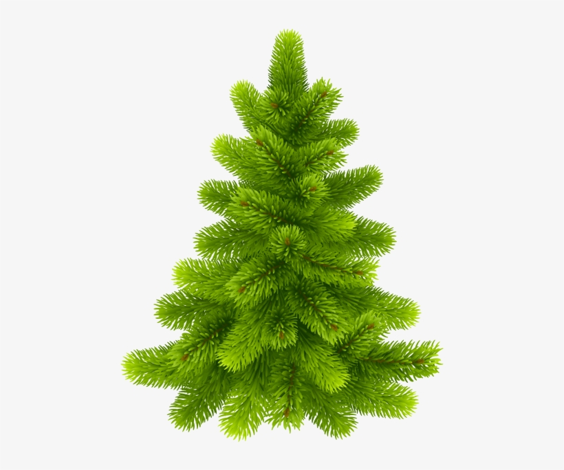 They are found through much of north and central america, europe, asia, and north africa, occurring in mountains over most of the range. Free Png Pine Tree Png Images Transparent Actual Christmas Tree Png Transparent Png 480x615 Free Download On Nicepng