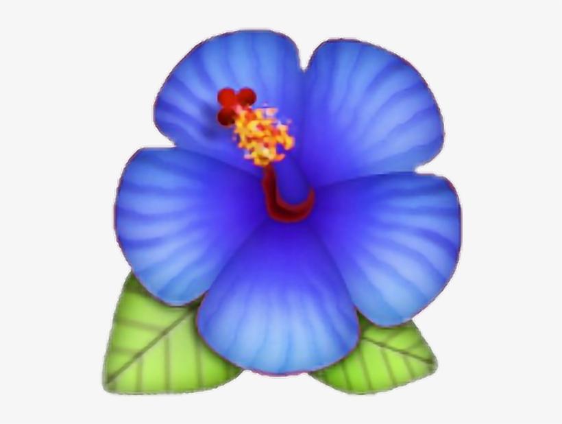Best Flower Site