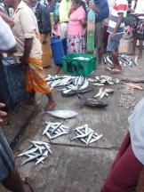 Sura Medura, Fish Market