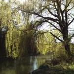 Am Kanal bei Parbasdorf