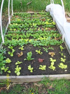 The Square Foot Garden