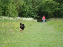Running at Brinsley Headstocks