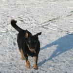 Nearly blind as a bat, bounding along the park in the snow,