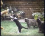 Twizzle, Tippy, Thomas