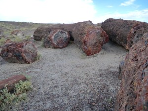 Petrified logs in the Petrified Forest. These fallen logs are from the late Triassic period approx 225 million years ago.