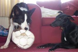 Snaffle and Sammy
