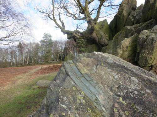 Sliding stone stump breccia, Bradgate Park, Leicestershire.