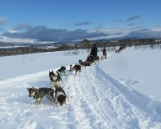 The husky convoy behind us. We were first.