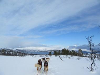 Great weather for husky sledding