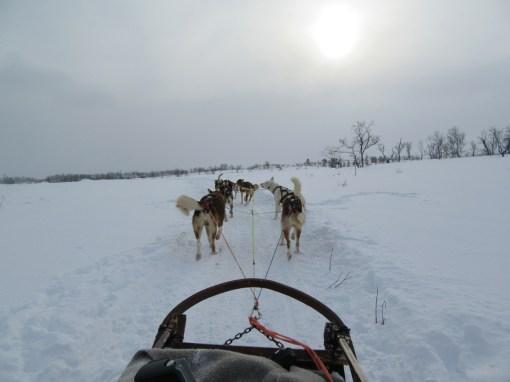 Perfect husky sledding weather