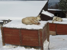 Sleeping on top of the kennels no matter the weather