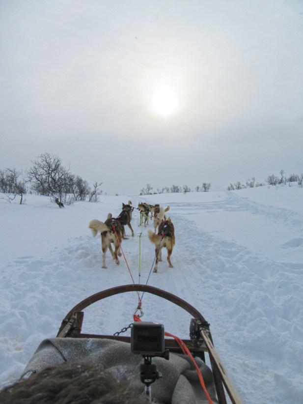 Dog sledding in Tromso