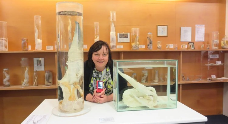 Sam (Mrs Cook) at the Icelandic Phallological Museum