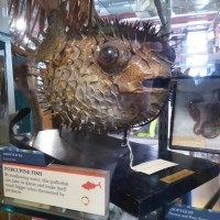 Weird Things in Jars - The Grant Museum of Zoology