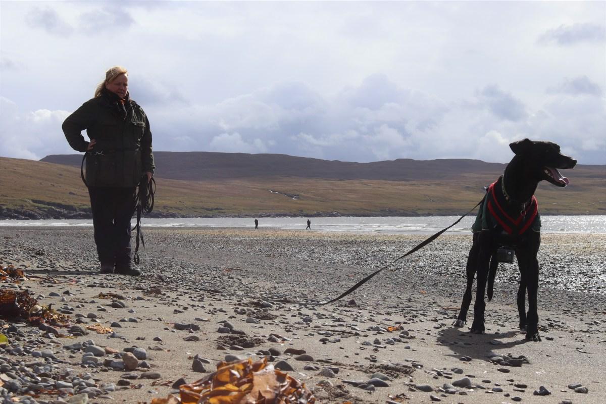 In The Footsteps of Dinosaurs - Isle of Skye