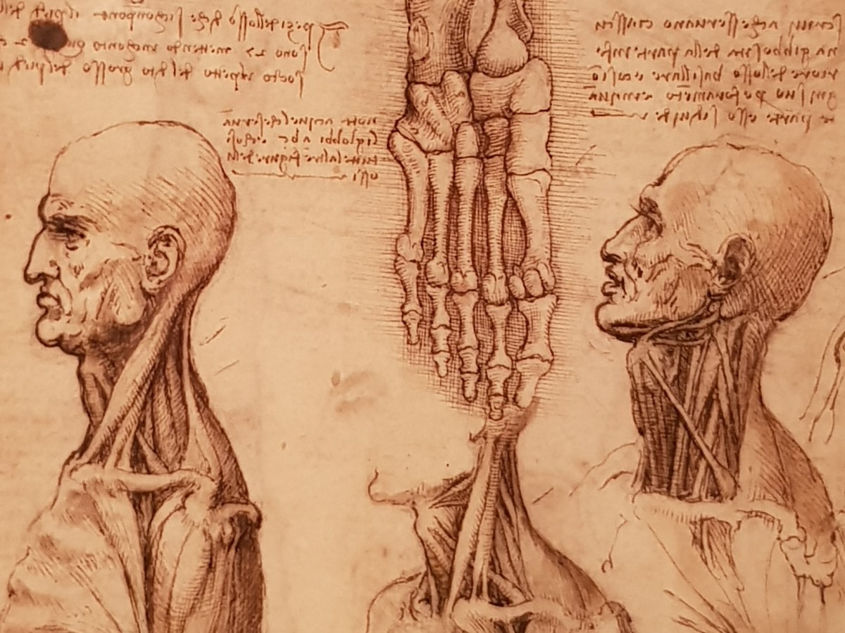 Leonardo Da Vinci Drawings at Derby Museum