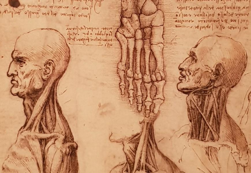 Leonardo Da Vinci Drawings at Derby Museum