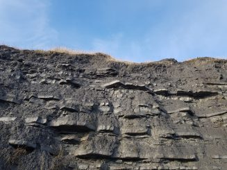 Can you spot the large ammonite near the top?