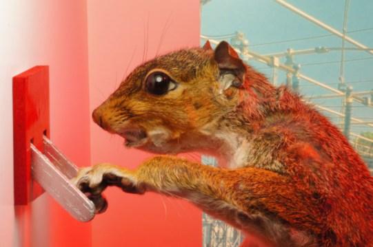 Gridsquirrel