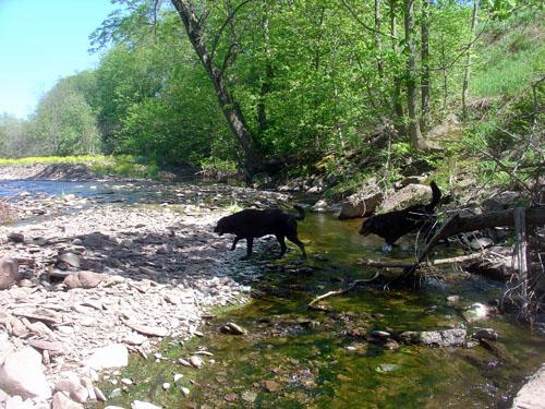 fokish farm dogs creekwalk