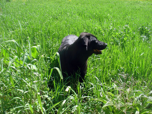 fokish farm Ty in the fields