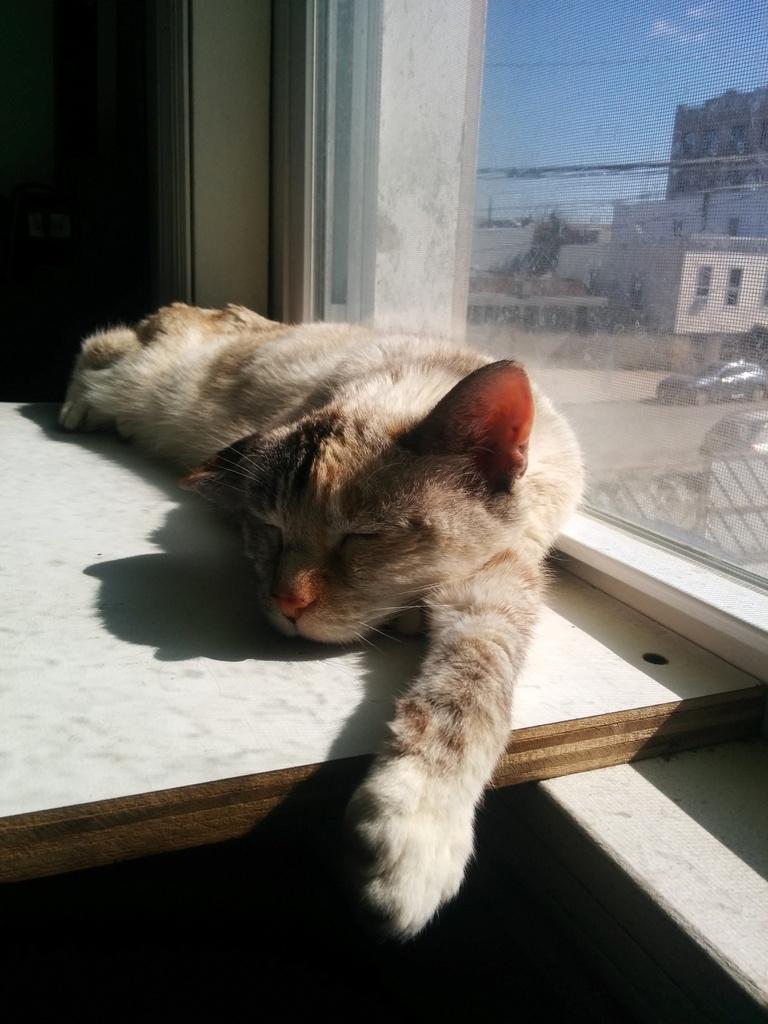 sun soaker