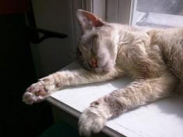 It's sun o'clock - nap time!