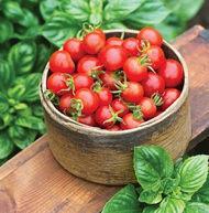 Tomato Baby Boomer 10 seeds