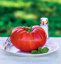 Tomato Gigantomo 10 seeds