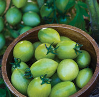 Tomato Green Envy 15 Tomato seeds