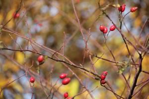 branches-d-arbre-en-automne-rouge-marron