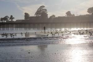 la-plage-et-la-mer-en-californe-avec-oiseaux