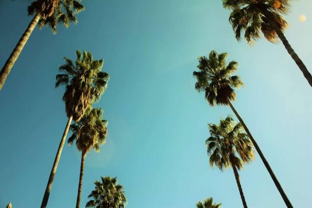 vue-du-bas-des-palmiers-stanford-university-california
