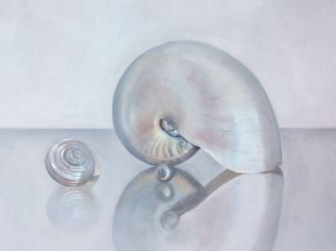 Nautilus, shell and pearl reflections on a glass surface