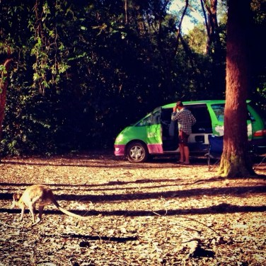 A wallaby by our campervan at Ferns Hideaway Resort, Australia