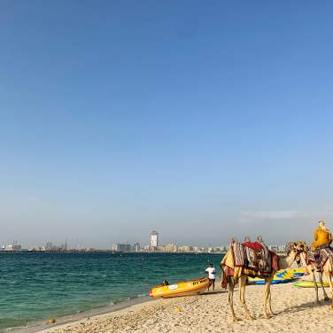 Camels on the beach, Dubai