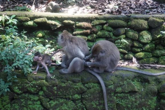 Monkeys in Monkey Forest, Ubud, Bali