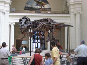 T-Rex (fonte: Wikimedia Commons)
